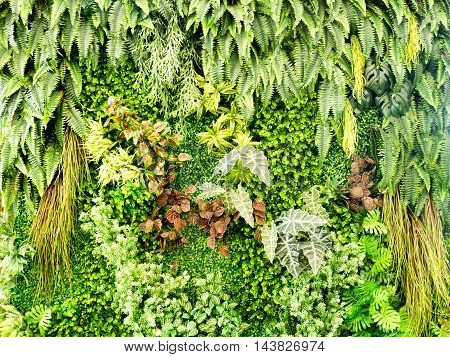 Green various creeper fern and lush plant on wall. Nature and environment concept. (selective focus)