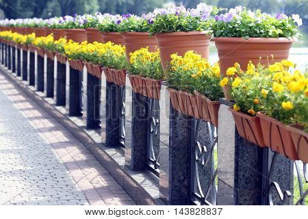 flowers in pots on the marble river embankment