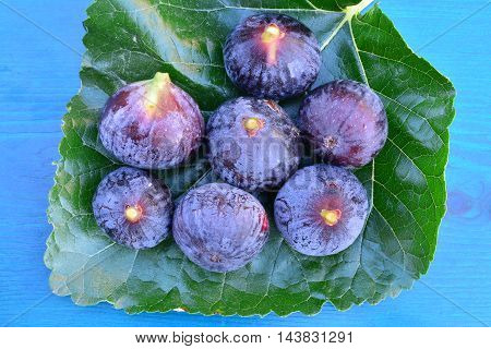 Several ripe blue figs on big mulberry leaf over blue wooden background view from above