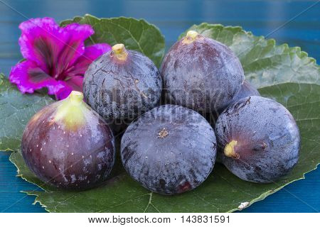 Several ripe blue figs and pink flower on big mulberry leaf over blue wooden background sidr view close up