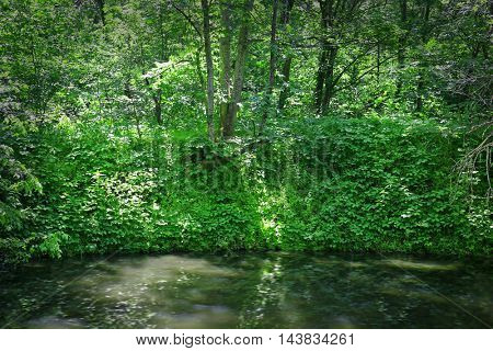 Quiet lake in green forest