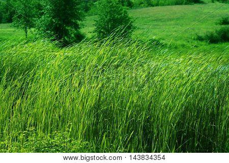 Vivid green hills
