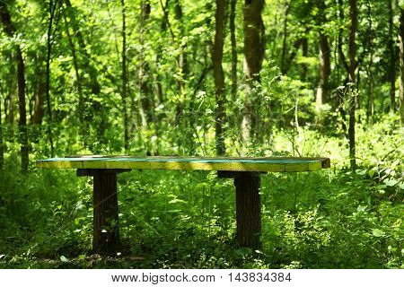 Wooden bench in summer forest