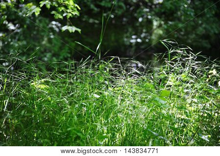 Green foliage in forest