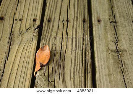 Single leaf on a boardwalk in the fall.