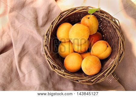 Heap of apricots in wooden basket on table