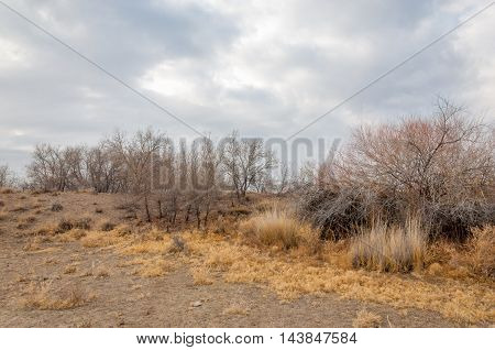 near desert. desert. steppe. spring trees in the desert