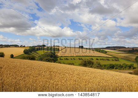 Harvest Time Landscape