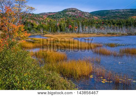 Seal Cove Pond In The Colors Of Autumn Mount Desert Island Acadia National Park Maine USA