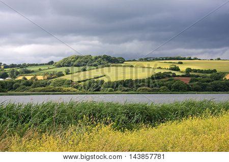 Rape fields by Slapton Ley in Devon