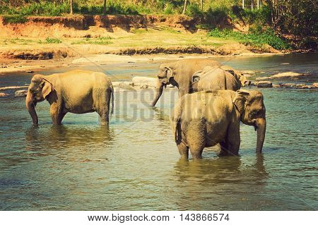 Elephants Are Large Mammals Of The Family