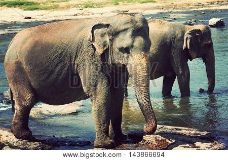 Elephant Attraction River Safari