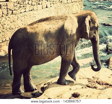 Elephant In River Outdoor Leisure Vintage Nature Background