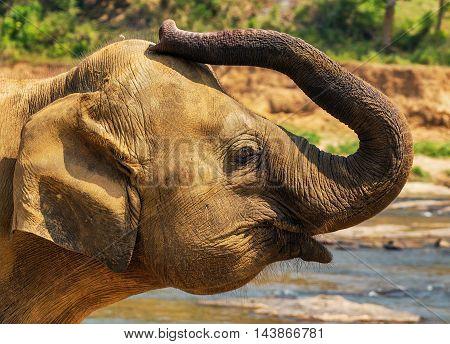 Animal Elephant Safari