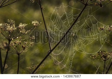 Spider web shaking on wind in forest