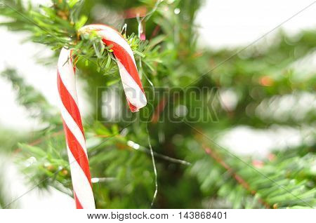 A candy cane hanging in a Christmas tree
