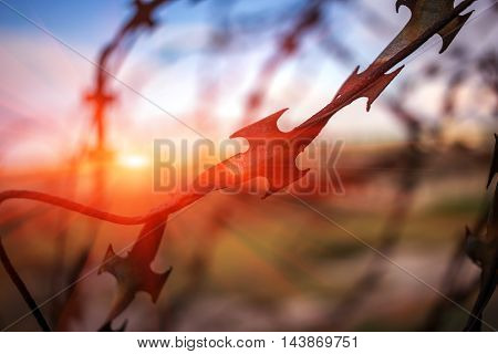 stabbing sharp fence on blurred sky background at sunset