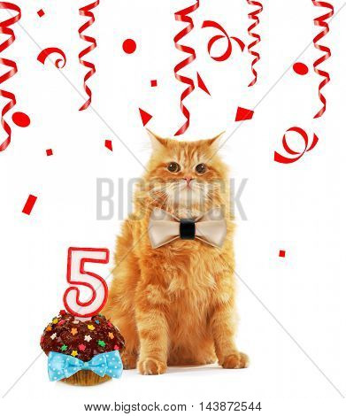 Red cat with birthday cupcake and red curved ribbons isolated on white