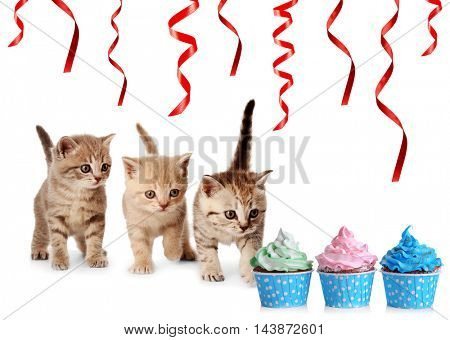 Small cute kittens and delicious cupcakes, isolated on white