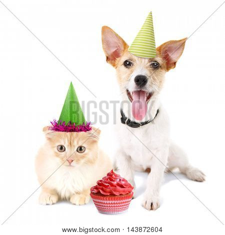 Cat and dog together with party hats and delicious cupcake , isolated on white
