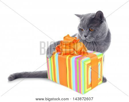 Short-hair grey cat and gift boxisolated on white background