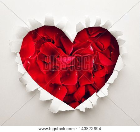 Torn paper  with petals background. Love concept.
