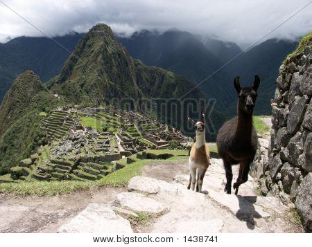 Macchu Piccu