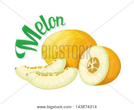 Melon. Vector illustration on a white background executed in a realistic style.