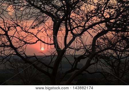 sunset with silhouetted tree and dust, Brazil