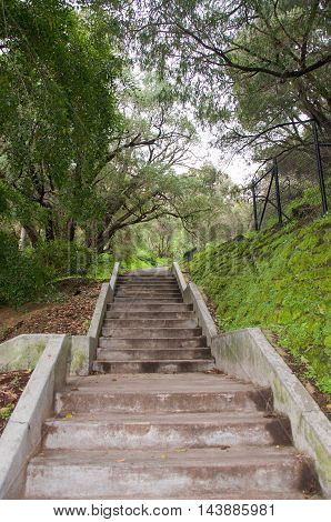 Upward perspective of steps leading through the green woodlands at King's Park Botanic Garden with mossy boundary wall in Perth, Western Australia.