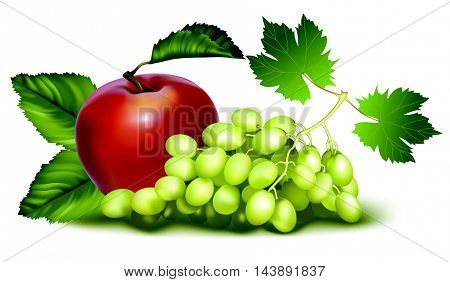 beautiful picture with grapes. impressive detail . Download now. exceptional grapes
