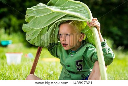 A little preschool boy who has harvest a great bunch of rhubarb in the garden on a sunny spring day. He wears a green jacket
