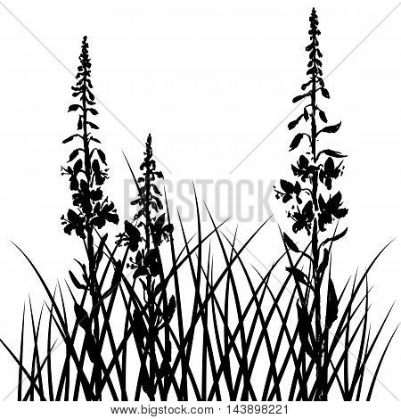 vector silhouettes of willow herbs flowers and grass, background with wild plants, black monochrome floral template, hand drawn illustration