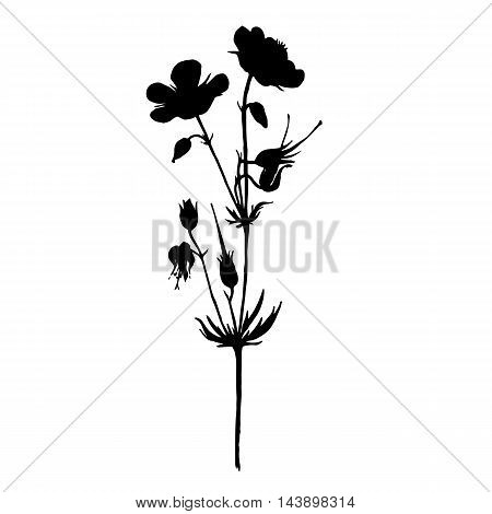 Vector silhouette of drawing wild flower, wild plant, isolated floral element, hand drawn illustration