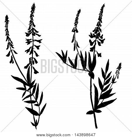 Vector set of wild flowers silhouettes, isolated wild plants, black monochrome floral elements