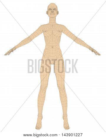 Nude girl polygonal. Vector illustration. Female anatomy. Isolated girl.