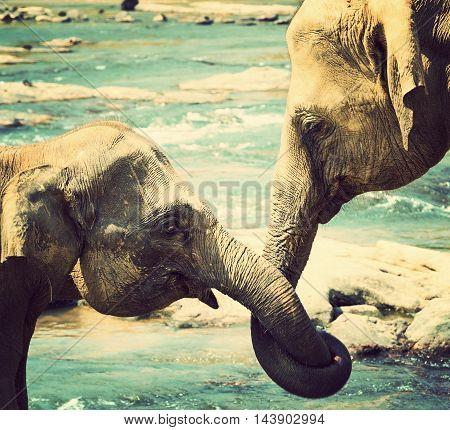 Kissing Elephant Love