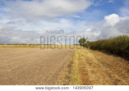 Hedgerow With Cultivated Field