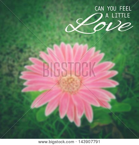 love quote - can you feel a little love with blur background of pink flower