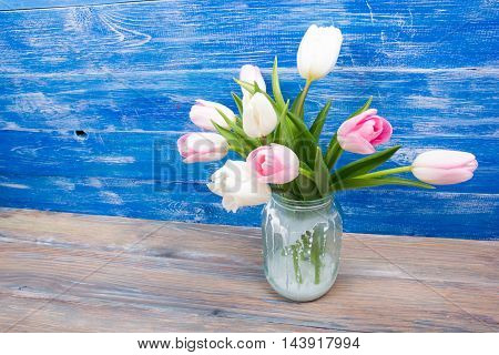 Beautiful pink flowers tulips on blue wooden desk table. Copy space.