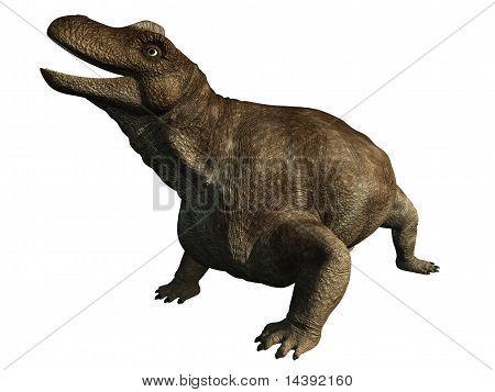 Dinosaurio - Keratocephalus