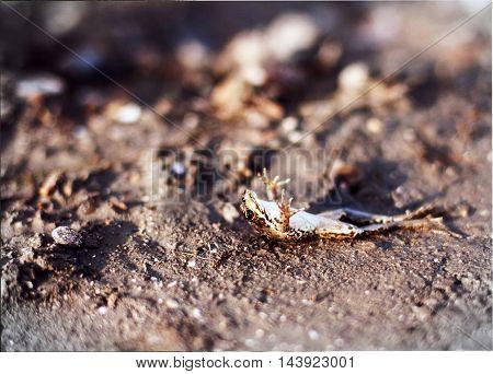 little frog basking in the summer sun