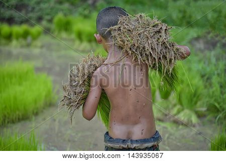 Baby on green pastures and farmers bearing seedlings to help his family.