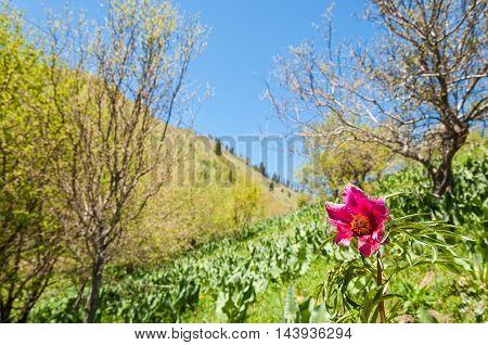 mountain park. Mountains Almaty Park's first president. Kazakhstan