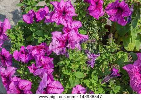 flowers in the garden on a summer day