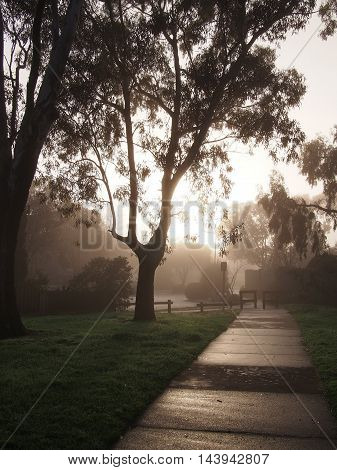 Creepy dark bike path with tree line and heavy fog against the sun rise Melbourne Australia 2015