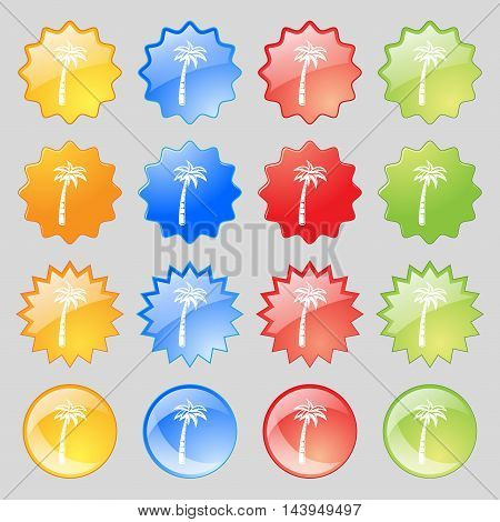 Palm Icon Sign. Big Set Of 16 Colorful Modern Buttons For Your Design. Vector