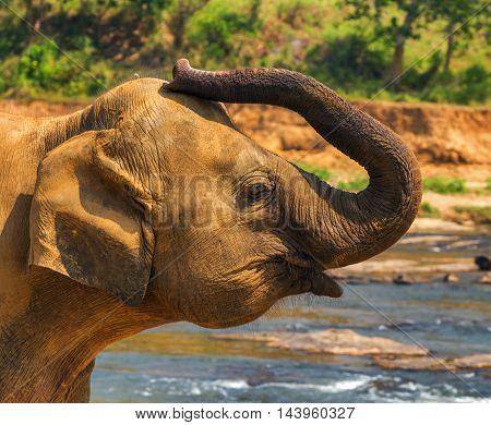 Elephant Attraction River Vintage Nature Background