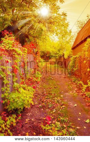Beautiful Autumnal Scene, Fall