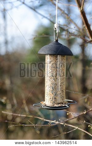 one bird feeder hangs in the three and wait for the bird to come